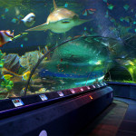 4 Neptun oceanarium in St. Petersburg