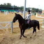 9 DERBI horse riding in St.Petersburg
